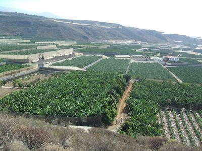 Banana Plantation For sale in Guia de Isora, Tenerife